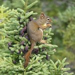 Terra Nova National Park: lunch time for a local resident!