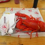 Photo of Sprague's Lobster