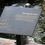 Foto di D.C. Booth Historic National Fish Hatchery