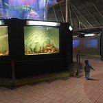 Aracaju Aquarium Foto