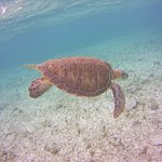one of the turtles spotted while snorkeling - used sea life camera
