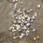 Malaquite Beach照片