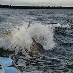 Bilde fra Surf's Up Dolphin Cruises