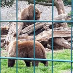 The bears in their large enclosure