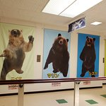 Photo of Noboribetsu Bear Park