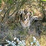 Walking through the serval enclosure