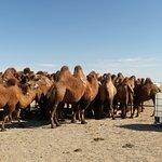 Gobi dersert