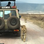 Photo de East Africa Adventure Tours and Safaris - Day Tours