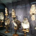 Фотография Museum of Natural History