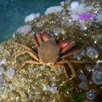 Foto di Sundown Divers
