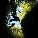 Photo of Les Caves de la Genevraie