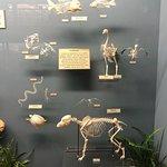 骨學博物館照片