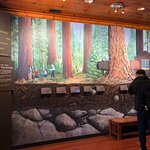 Bild från Giant Forest Museum