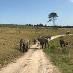 Beautiful animals wandering with folks walking alongside