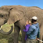 Our guide helping our girl get to engage with this beautiful ellie