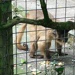 Фотография The Monkey Sanctuary