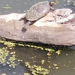 صورة فوتوغرافية لـ Tifft Nature Preserve