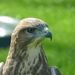 ภาพถ่ายของ Falconry UK Thirsk Birds of Prey Centre