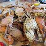 Large Maryland Crabs!!