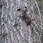 Chattering squirrel, very annoyed at me