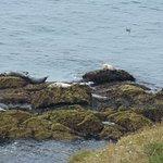 Seals near the lighthouse