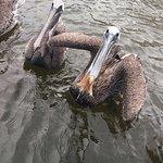 صورة فوتوغرافية لـ Biloxi Shrimping Trip