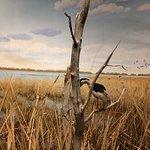 Parklands marsh