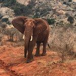 Foto van Oranje Safari
