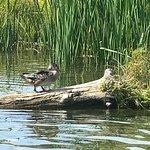 Foto Riverside Canoe Trips