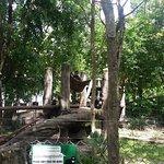 Φωτογραφία: Phnom Tamao Wildlife Rescue Center