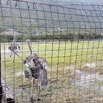 Photo de Cape Point Ostrich Farm