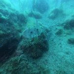 Foto de Submaldive Elba Diving