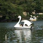 Photo of Inokashira Onshi Park