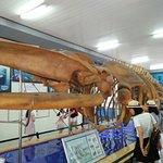 Foto National Oceanographic Museum of Vietnam