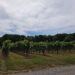 Angels Gate Winery照片
