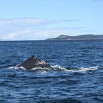Bild från Five Star Whale Watching
