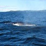Five Star Whale Watching의 사진