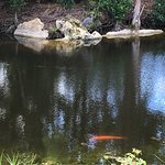 blue heron and koi; Morikami Gardens
