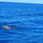 So thrilled for my non diving wife to get to see a pod of Dolphin on way to first dive site