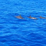 another Dolphin shot