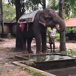 صورة فوتوغرافية لـ Elephant Junction