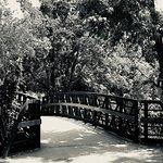 Lady Bird Lake Hike-and-Bike Trail의 사진