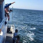 Photo de Capt Bill & Sons Whale Watch