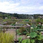Foto Les Jardins d'Eau
