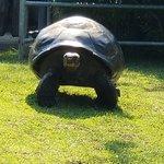 Zdjęcie Philadelphia Zoo
