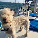 City Dogs Sailing