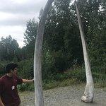 whale jawbone