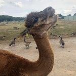 صورة فوتوغرافية لـ African Safari Wildlife Park