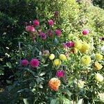Foto van Volunteer Park Conservatory