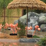 Turtle Back Zooの写真
